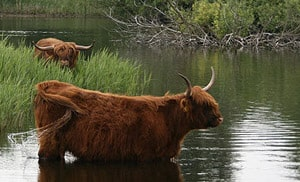 wildernisvlees